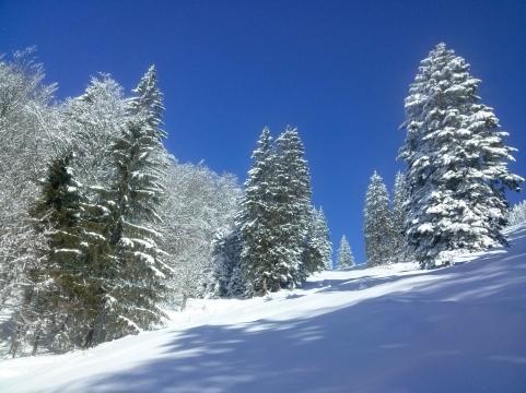 Zimska pravlica