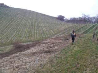 Prijeten tek med vinogradi