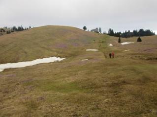 Velika planina žafrani (40) (1024 x 768)