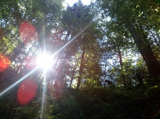 Podiranje dreves v okolici jame (poleg globalnega segrevanja) naj bi prispevalo k taljenju ledu v jami