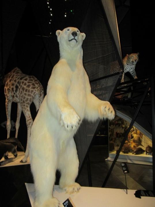 Severni medved