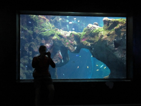 Lyonski akvarij