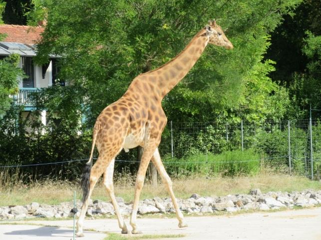 Živalski vrt v Lyonu