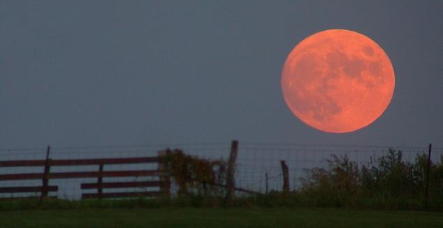 V ponedeljek bo Luna izgledala približno tako (https://en.wikipedia.org/wiki/Full_moon#/media/File:Harvest_moon.jpg)
