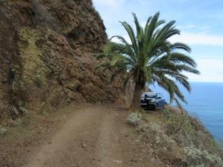 Parking pod palmo. Zakaj pa ne.