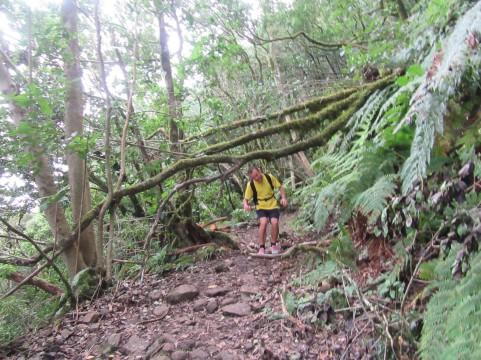 Tek skozi džunglo