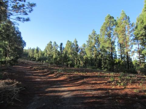 Džungla na nadmorski višini 1600 m preide v borov gozd