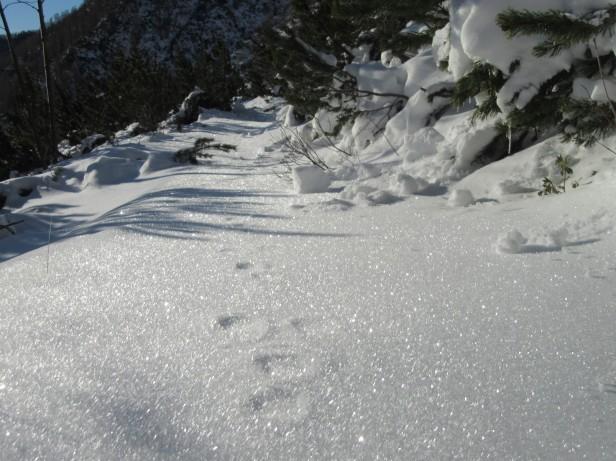Snežni kristali