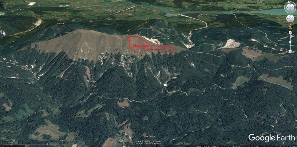 Lokacija rastišča narcis
