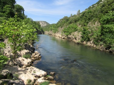 Reka gellone
