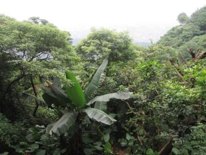 Subtropski deževni gozd