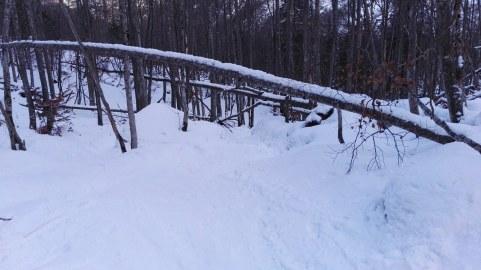 Zahtevno smučanje skozi gozd