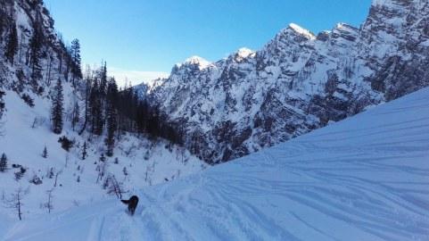 Pes na snegu