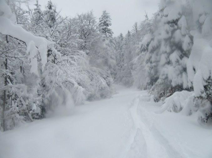 Cesta na Bistriško planino
