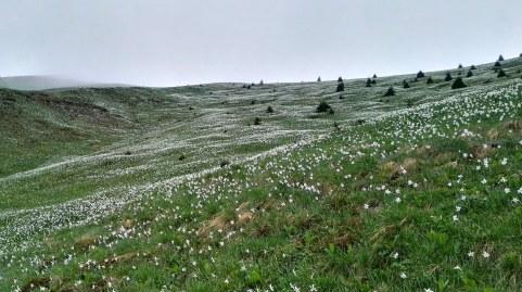 Bele poljane