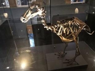 Izumrli prič dodo