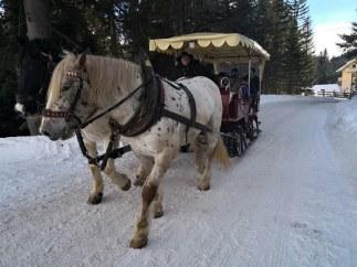 Konjske vprege na Katschbergu