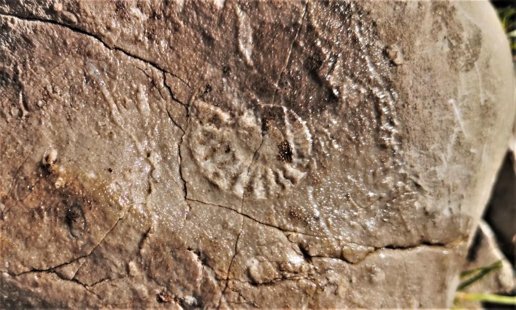 Amonit na Begunjščici